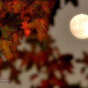 Fall Moon Autumn Nature Tumblr HD Wallpapers